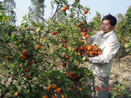 Kết quả hình ảnh cho trồng cây ăn quả